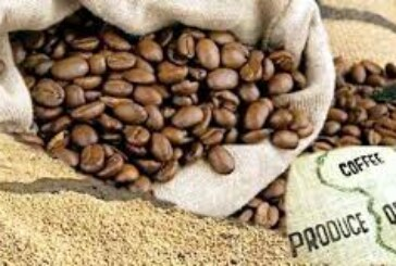 Kenya's Coffee may lose global appeal because of contamination