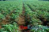 FG revives 300-hectare farmland, engages 400 youths