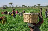 """""""Only 5% of farmers access agric insurance"""""""