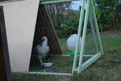 Chook Tractor 2