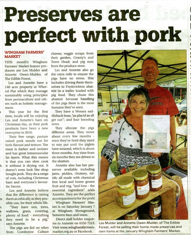 "This month's Wingham Farmers' Market feature producers are Les Mulder and Annette Owen-Mulder of The Edible Forest. Les and Annette have a 140 acre property at Wherrol Flat which they manage sustainably using principles from permaculture and others such as holistic management. This year for the first time, savvy locals will be enjoying Les and Annette's ham on Christmas day, as their pork products have been a new enterprise in 2016. Their free range, pasture raised pork stands out for both flavour and texture. The meat is darker and moister and has great intramuscular fat layers. What this means is that you can slow cook it without it drying out. It doesn't even look like shop bought pork. They do a range of cuts, including Christmas ham and everyone's favourite, bacon. Les and Annette believe that the difference is raising them as ethically as they possibly can, for their whole life. ""They have sun, trees, wallows, grass, covering, plenty of food - everything they need to be a pig"" says Annette. The pigs are fed on whey from Comboyne Culture cheese; veggie scraps from their garden, Granty's and Town Head; and pig nuts from the produce store. Les and Annette also go the extra mile to ensure the pigs have no stress. This includes driving them themselves to Frederickton abattoir in a trailer loaded with pig food. They chose this abattoir because handling of the pigs there is the most humane they've seen. They have a Wessex saddleback boar, ""as placid as all get out""; and four breeding sows. There is Brunhilda, a Berkshire x large white; Esmerelda and Bludwin, Wessex Saddleback x large white x Berkshire; and Ladybird, a Duroc. They allocate the pigs different areas. They move about every few months - once they've bred they need to stay put until the piglets have weaned, which is about three months. Any time from six months they are driven to the abattoir. Annette also has her preserves available including jams, pickles, chutney, relish; all made with chemical free local and home grown fruit and veg, ""and love - the essential ingredient"" adds Annette. They are the perfect accompaniment for the pork!"