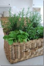 Bring a mix of Herbs presented in a nice basket or pot