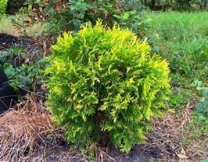 green leafy bush in field