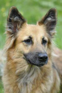 Brown dog, Pet Care, www.theeducationaltourist.com