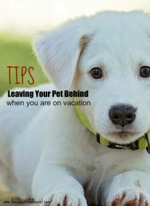 White puppy with green collar, tips leaving your pet behind when you are on vacation, www.theeducationaltourist.com