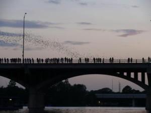 Bats flying out from under Congress Street Bridge Austin, Austin Visit, www.theeducationaltouristi.com
