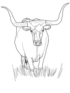texas-longhorn-cattle-coloring-page, Austin Visit, www.theeducationaltouristi.com