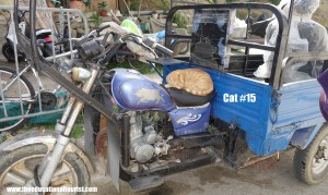 Cat sleeping on motorcycle in Morocco, Travel with Intention, www.theeducationaltourist.com