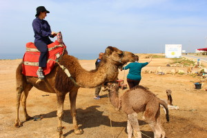 Camel riding; Mom and baby camel
