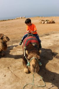 Camel riding: boy on seated camel.