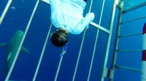boy in shark cage, Swim with Dolphins, www.theeducationaltourist.com