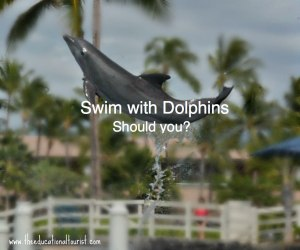 Dolphin jumping, swim with dolphins, www.theeducationaltourist.com