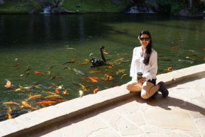 The Educational Tourist, koi and black swain in Hawaii