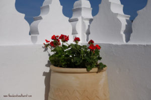 Red flowers on against a white wall in Morocco, La Maison Blanche, www.theeducationaltourist.com