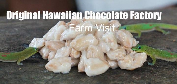 three geckos licking fresh cocoa beans, Original Hawaiian Chocolate, www.theeducationaltourist.com