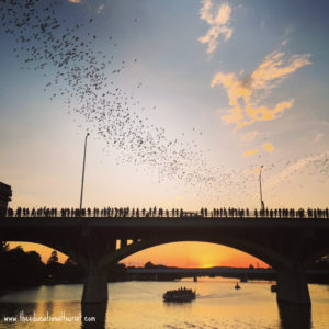 Congress street bridge in Austin with sunset and bats leaving