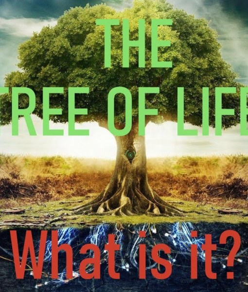 The Tree of Life – What is it Really