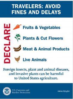 Declare items (003)