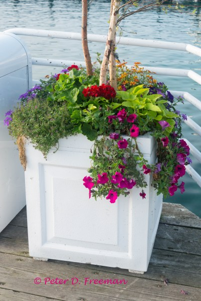 Dock Planter