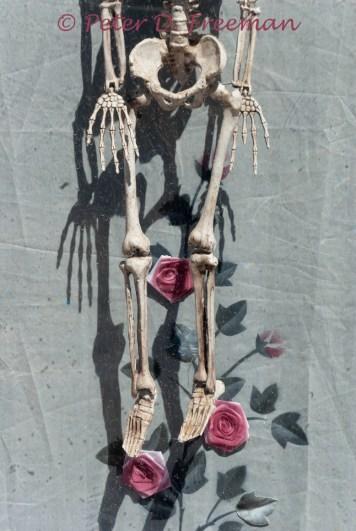 Bones and Roses
