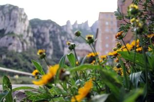 Monsterrat_Yellow Flower