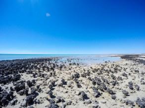 Hamelin Pool Marine Nature Reserve- the living marine stromatolites