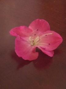 pink-bloom