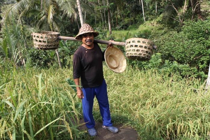 Bali rice field worker