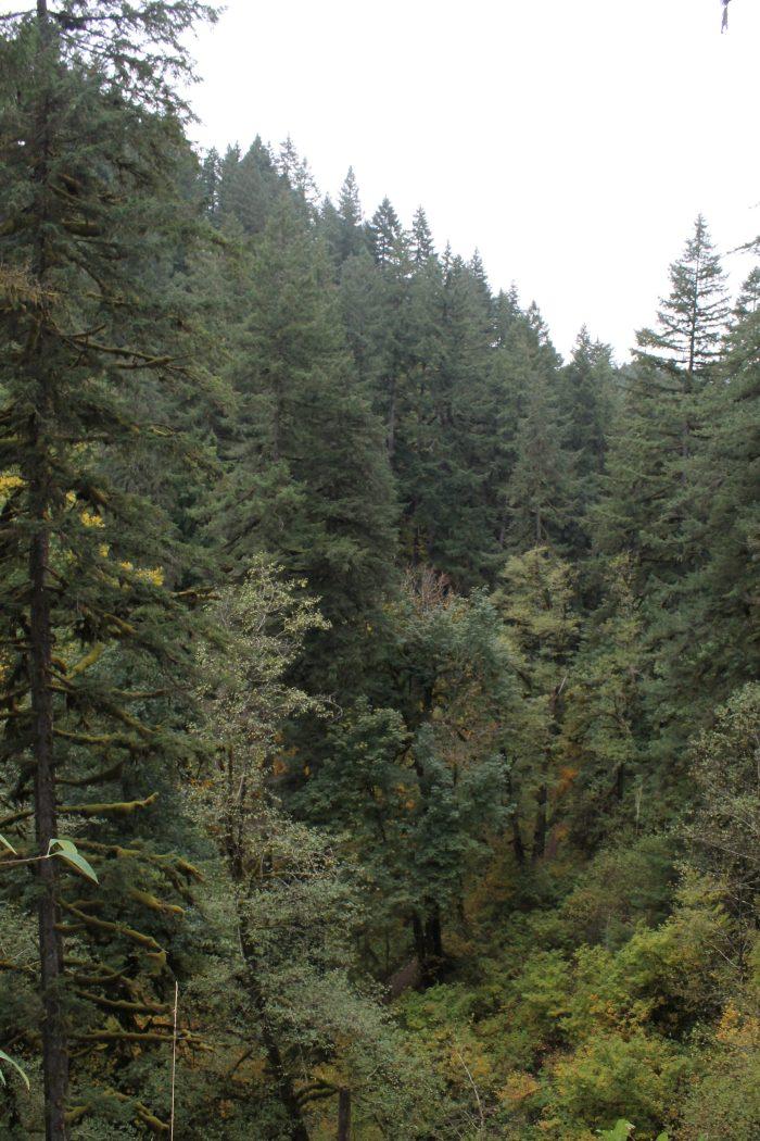 Silver Falls State Park Oregon www.TheEnchantedGypsy.com