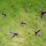 mosquito-virus-dengue-eee-epidemic