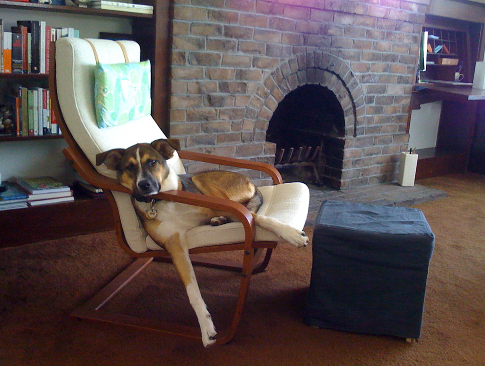 Ikea Chair Cushion Poang