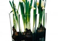 Alvar Aalto Vase Inspiration