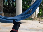 What's that doing in my hammock?