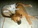Malu and Caila
