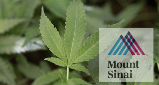 a - med marijuana_3