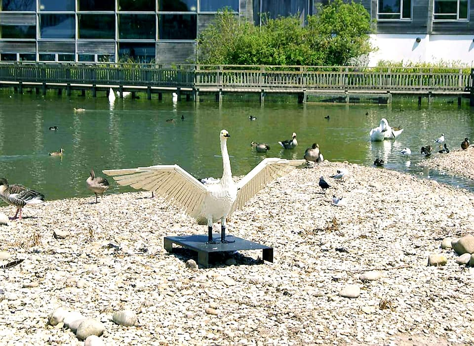 a lego swan at wwt slimbridge