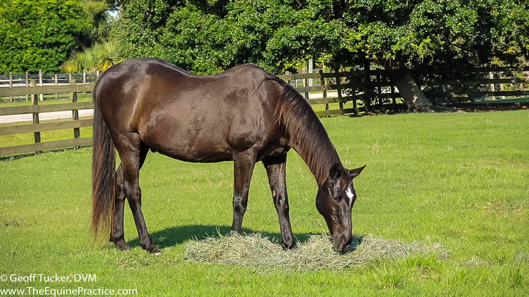 Horses- Tucker-140426-0253
