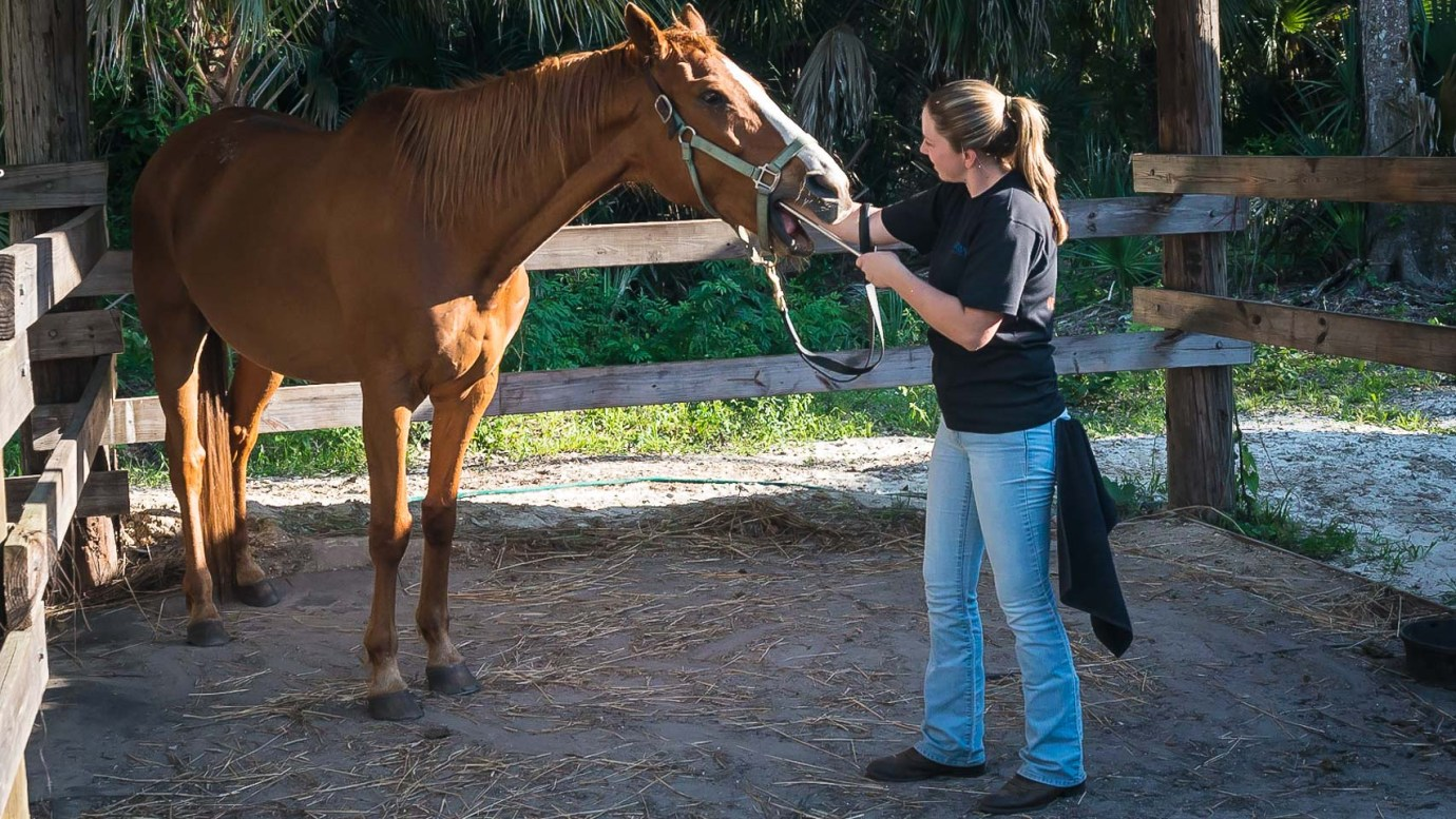 The Equine Practice Inc, Travels With Doc T