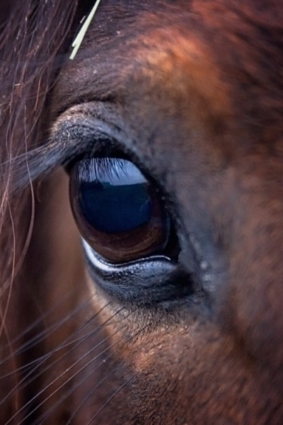 Eye Of The Horse