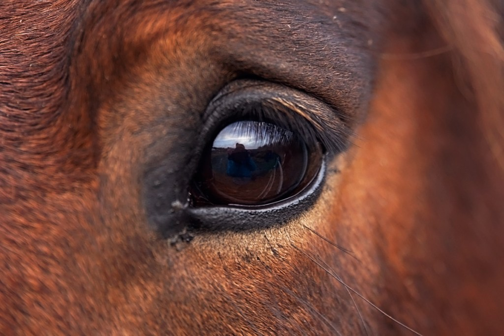 The Eye Of The Horse