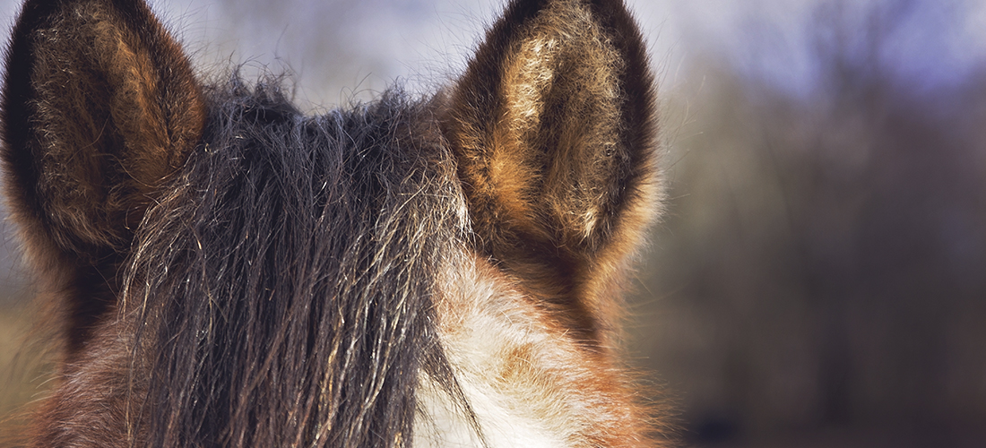 horse health and welfare
