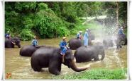 ออกแคมป์ที่ศุนย์ฝึกลูกช้าง