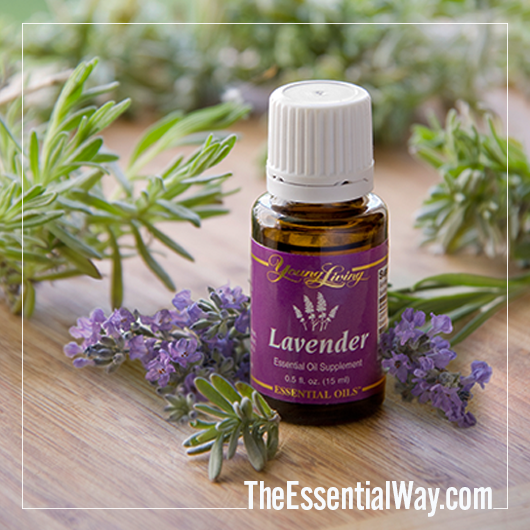 Young Living Lavender Essential Oil The Essential Way