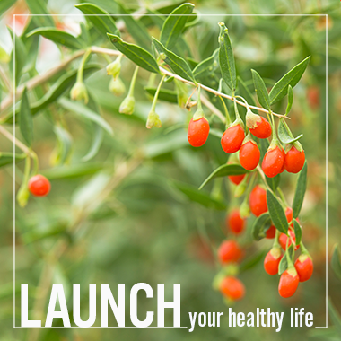 Launch Your Healthy Life