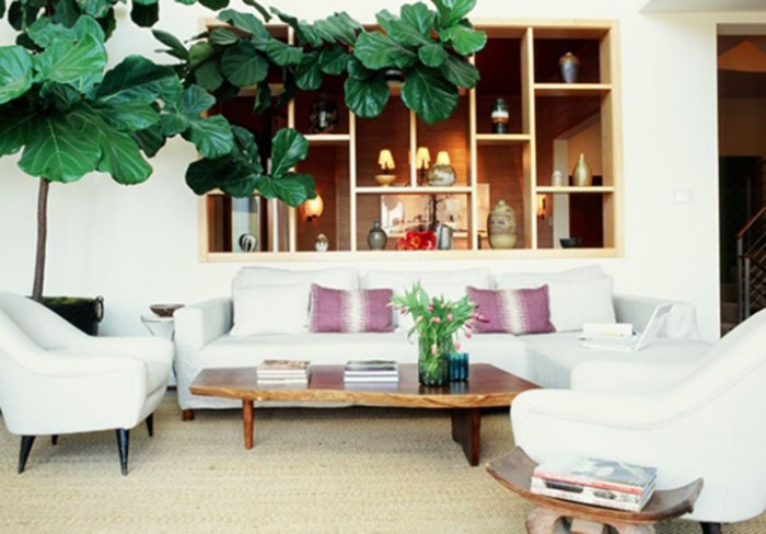 huge fiddle leaf fig reaching - Fiddle Leaf Fig Tree