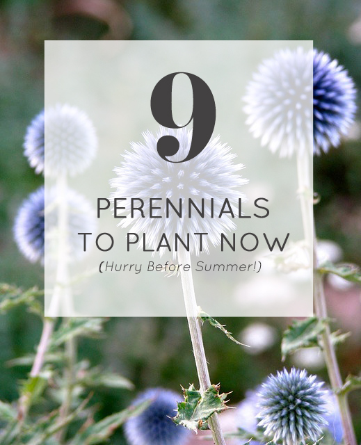9 Perennials to Plant Now