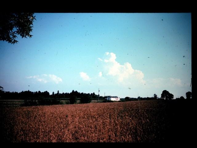 dad tobacco field