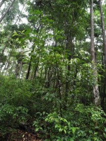 rainforest grows in the sandy soil in the centre of the island