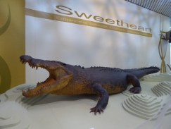 Sweetheart the crocodile, at the Museum.