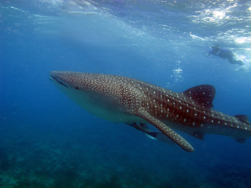 Discover Scuba Diving in Maldives